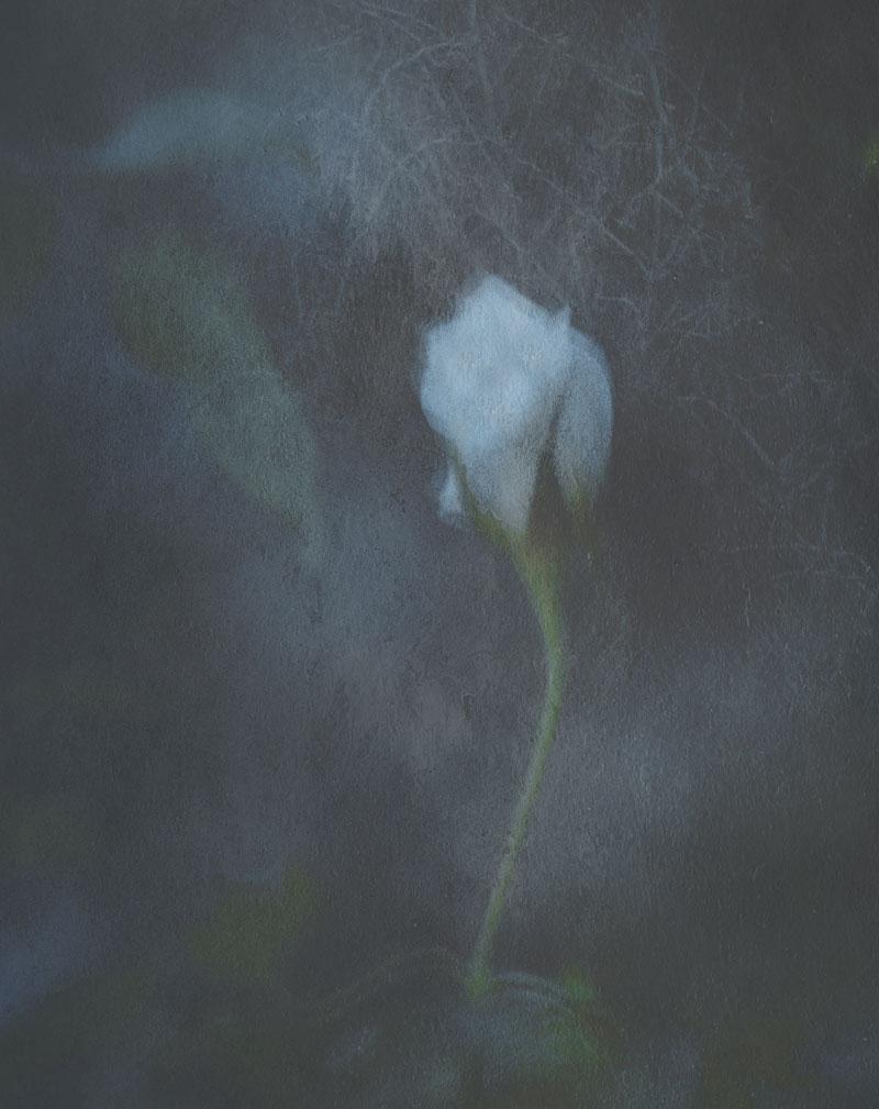 FASHION---Vanishing-Flowers1