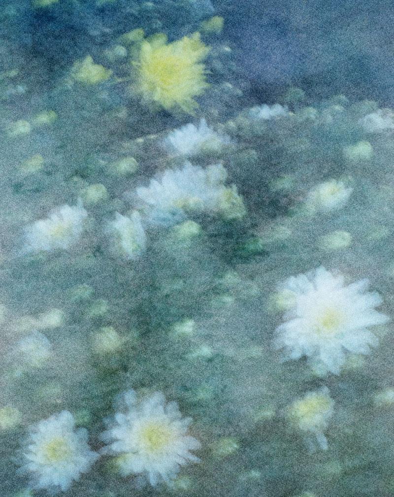 FASHION---Vanishing-Flowers2